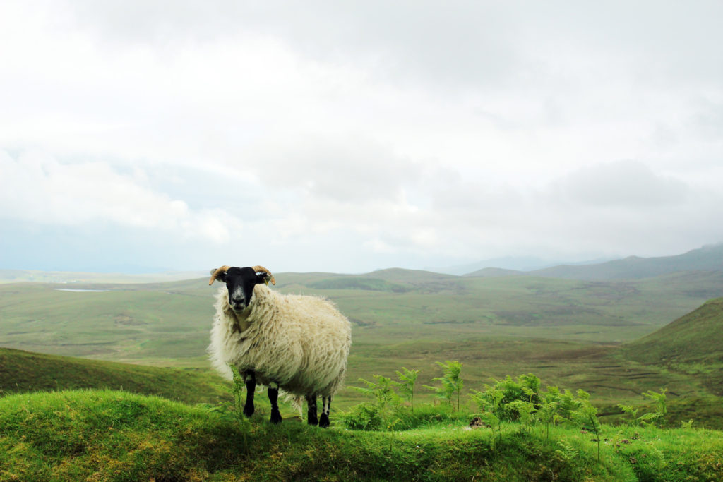 16 Breathtaking Photos of my Scottish Highland Tour from Inverness