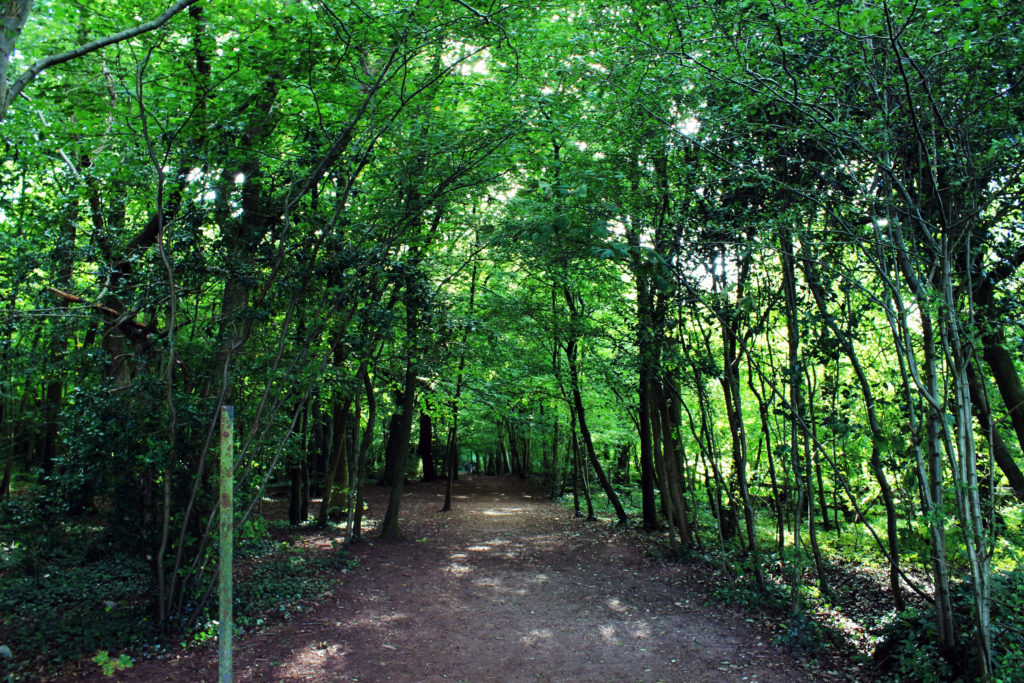 The fairy-tale shady woods surrounding the Manjushri KMC Ulverston